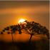 Prevajanje besedil s področja ekologije in varstva okolja - latinski