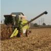 Prevajanje člankov s področja agronomije