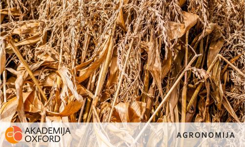 Prevajanju člankov s področja agronomije, Maribor