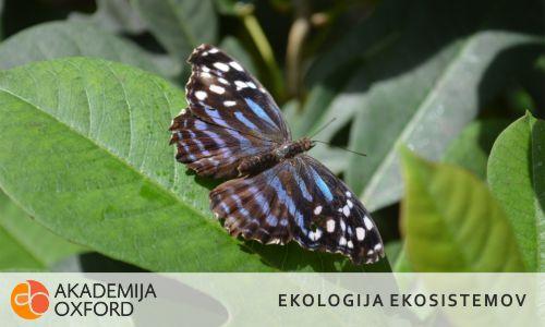Prevajanje besedil s področja ekologije ekosistemov